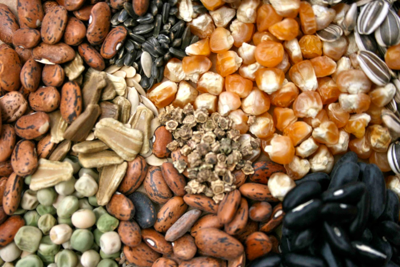 Global hybrid seeds market to reach $99,854 Mn by 2023