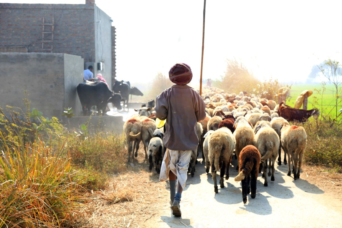 Livestock sector in buoyant mood upon another normal monsoon