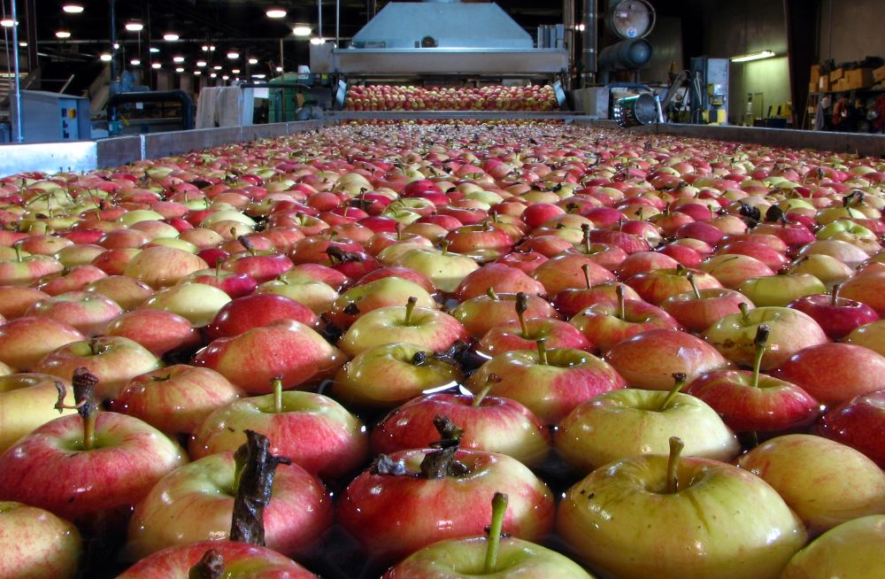 Horticulture production estimated to be 307 Mn tonnes
