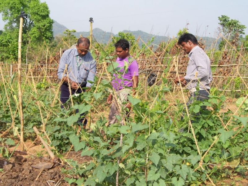 Cabinet approves action plan for agricultural education