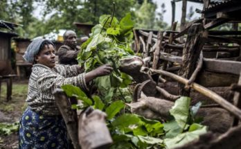 EU hails FAO's role in sustainability in food & agriculture