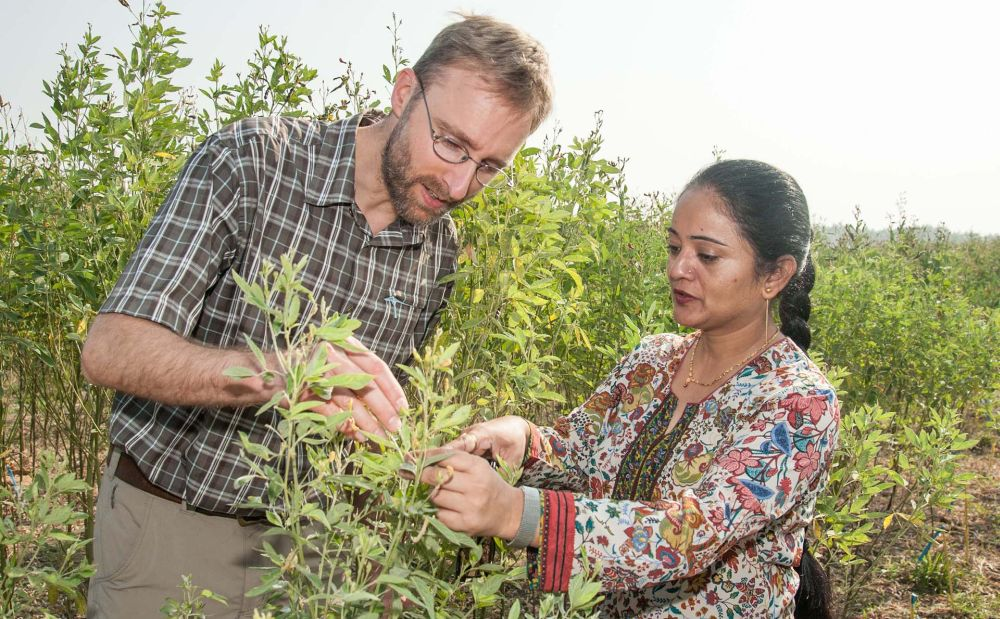 India-Myanmar pigeonpea program gets research boost