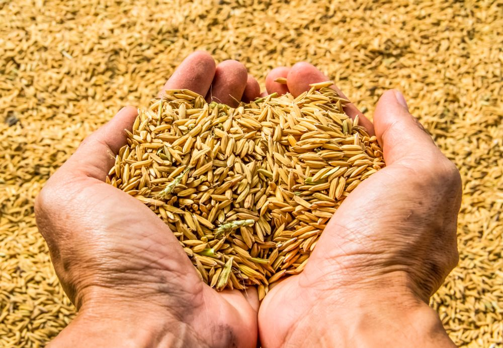New study identifies India as major seed hub in Asia