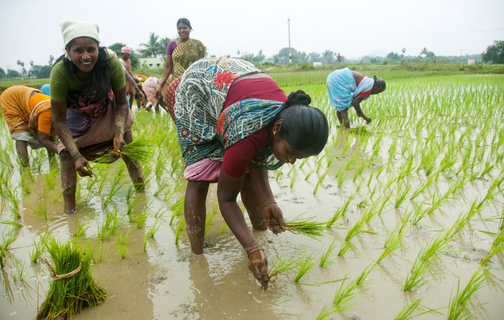 FAO, WFO to help farmers drive global agricultural agenda
