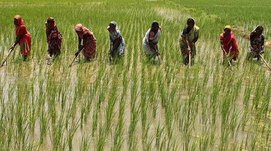 PI Industries, Fiinovation & Harsha Trust extend project for sustainable agriculture
