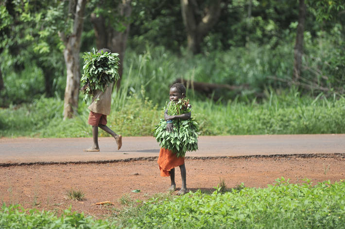 UN agency calls for global push to tackle child labour in agriculture
