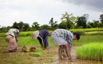 Here's how Economic Survey focuses at agriculture sector