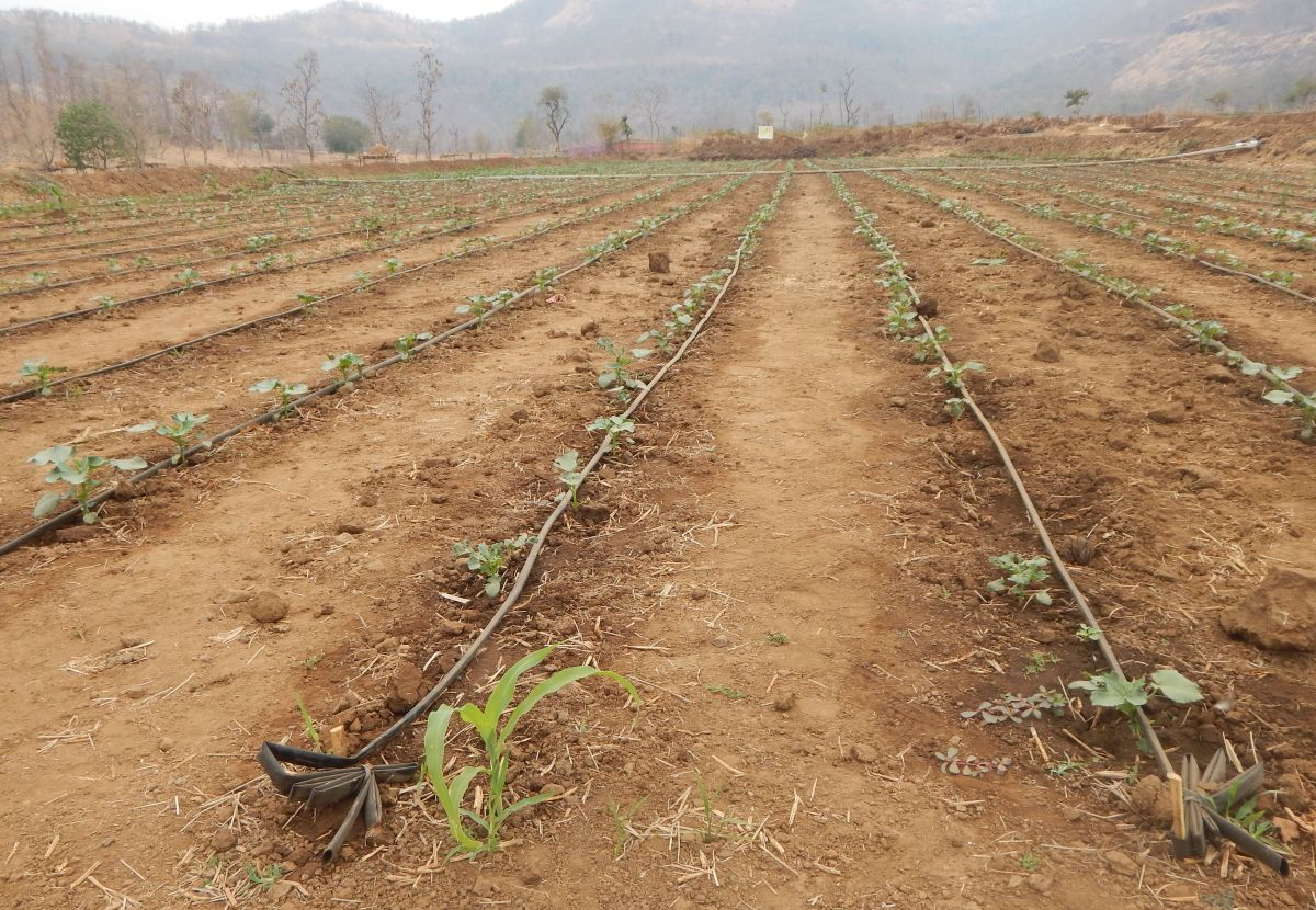 World Bank to fund $420 mn for climate resilient farming in Maharashtra