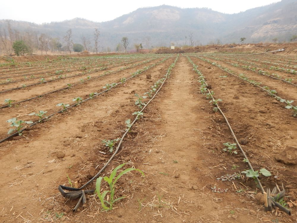 US$375 Mn ADB loan to expand irrigation projects in MP