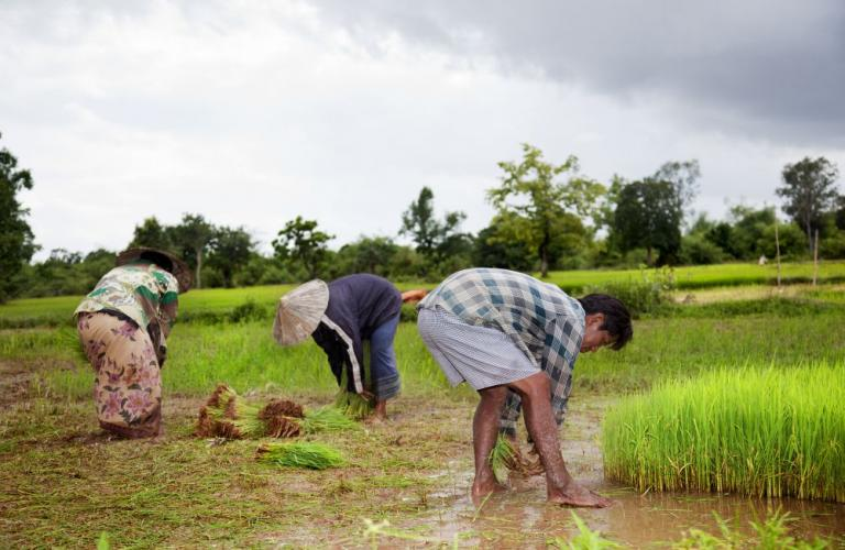 PDKV to launch diploma in agriculture extension with Dhanuka Agritech
