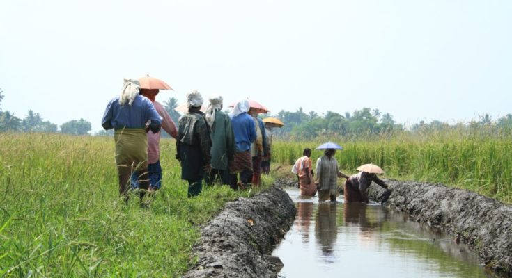 Economic Survey: Priority should be given on irrigation water productivity