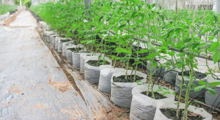 Global treaty critical for conserving plant genetic resources amid climate change