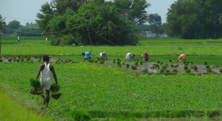 Agriculture sector may grow at 3.1% in 2019-20: NITI Aayog